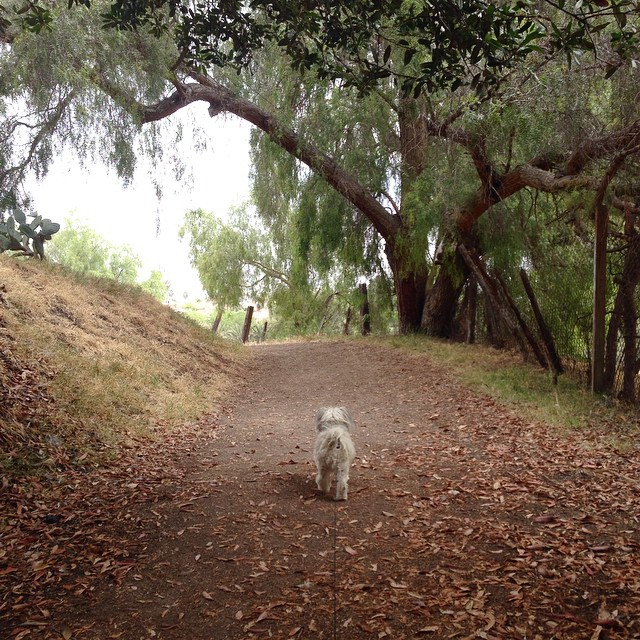 We found a hidden gem in #sanpedro why let's just go hiking