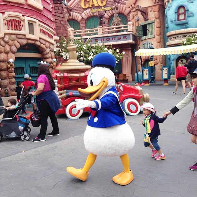 Wait for us Donald... Quack quack!