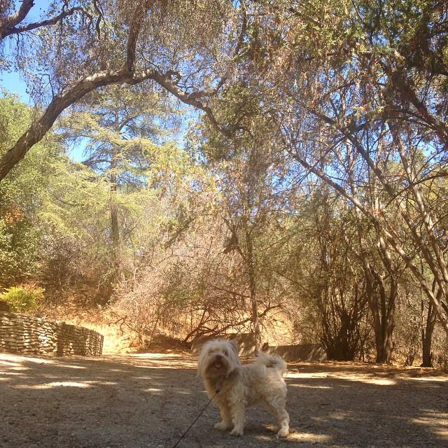 Daisy's birthday hike! It's hot up in da valley!