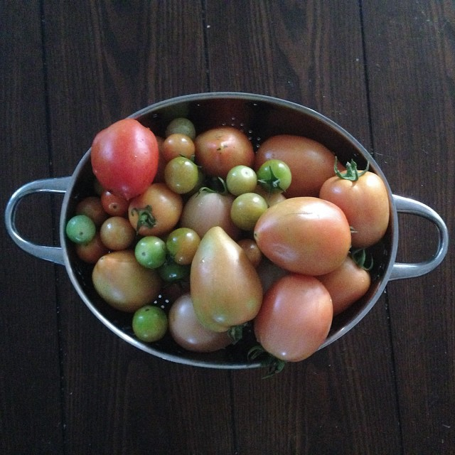 #tomatoetuesday #homegrown yipeeeeeeeeee, proud of my ma & Auntie!