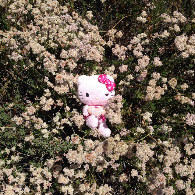 #hellokitty wanted to enjoy the warm day! Meowww!!