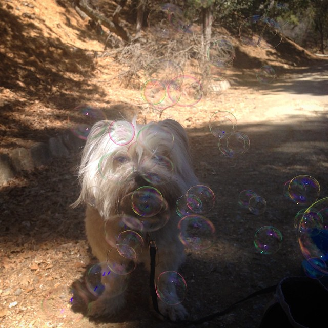 Bubbles all in your face my cutesy!!!