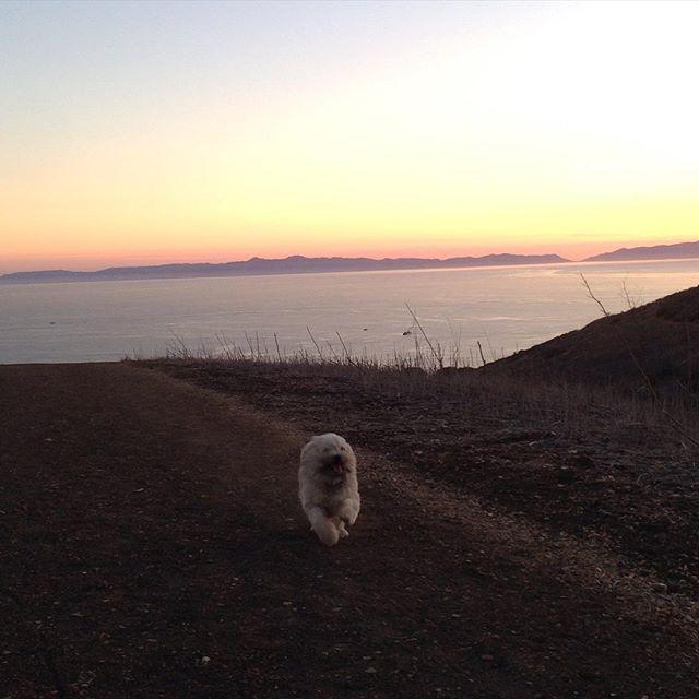 Looks like a seal 🐋on land! #hiking