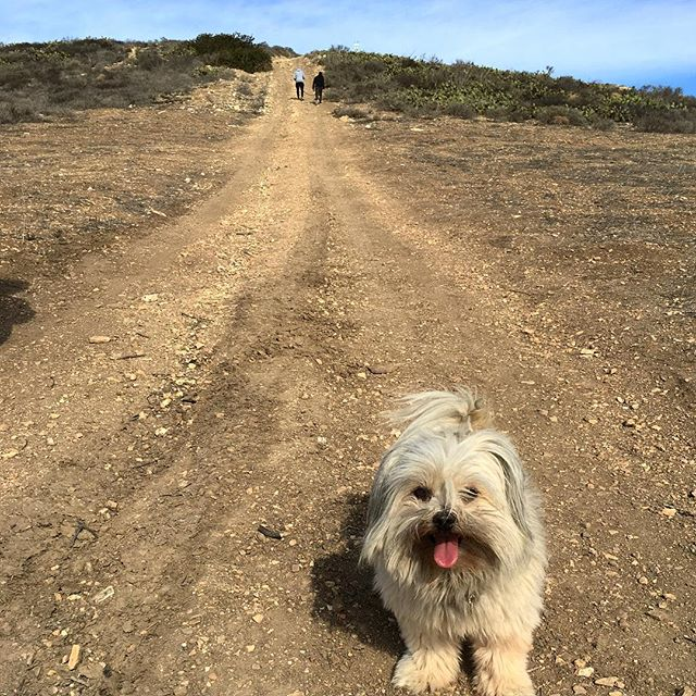 Them hills though... Try carrying a cute pup all the way up!!!
