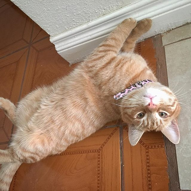 How I felt today and I am totally sober! My name is Amanda and I have been 4 days sober! That's a record!  #caturday