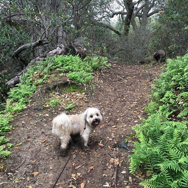 Beautiful greens  on a rainy day! #hike