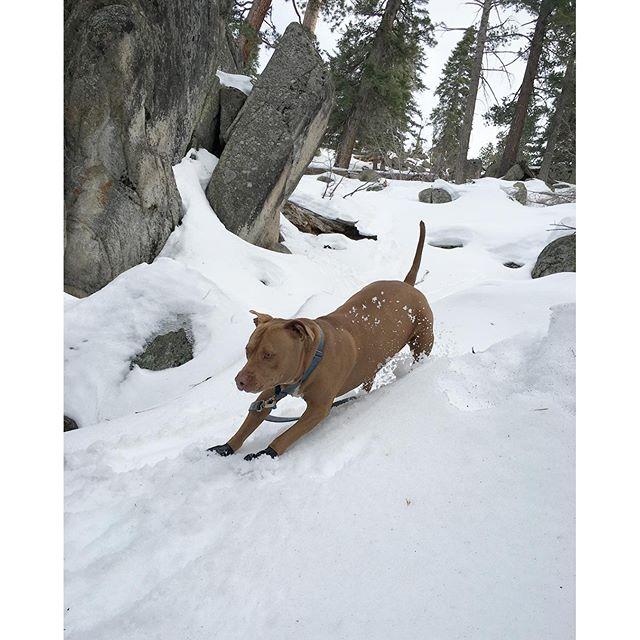 #dog sliding? ☃🐕