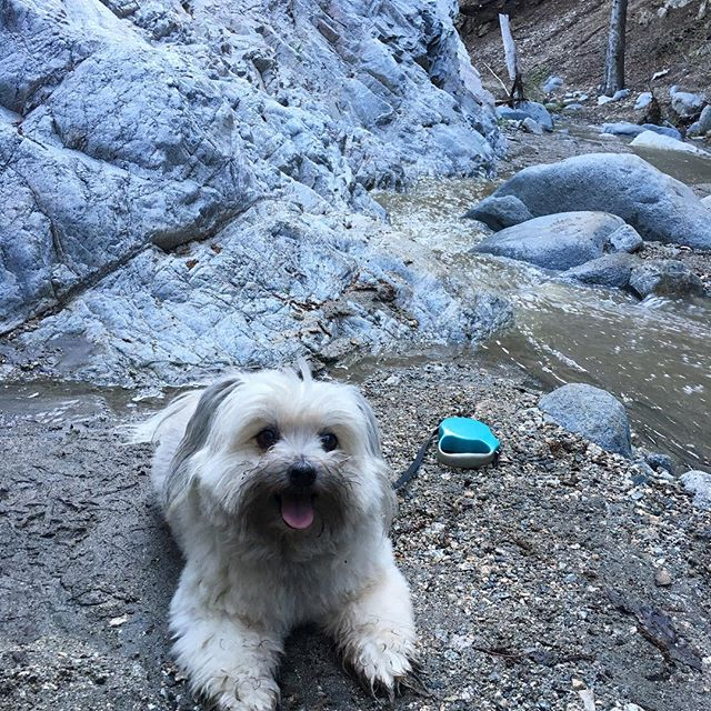 Loving the colors of the rocks!!! 🏞🐕 #nature