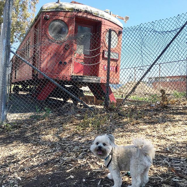Walking to sight see a train! #dogsofinstagram