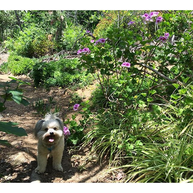 Hike to a garden! Purdy relaxing except for the climb!!