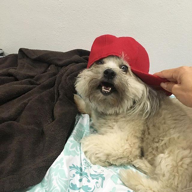 Daisy is rocking a #Jordan SnApBack #hat ... Thug lyfe! @swayray