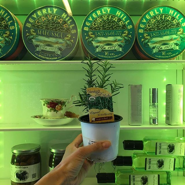 I REALLY wanted to try out that fancy Beverly Hills Caviar. You know I like to live on the edge of Fancy but I Nicolas Cage poor. I decided to opt for the more economical choice and just got an organic Rosemary #plant at Gelson! I made my family proud #chinese
