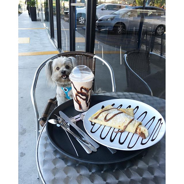 Hero Daisy wants some dessert!