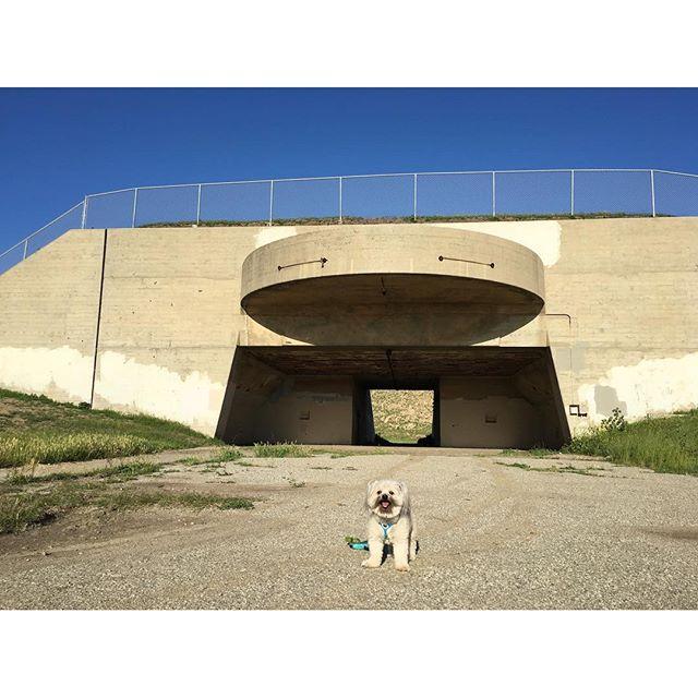 Cutest bunker pup!