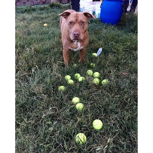 Yeah all them balls for me bro! I am having a ball(s)!