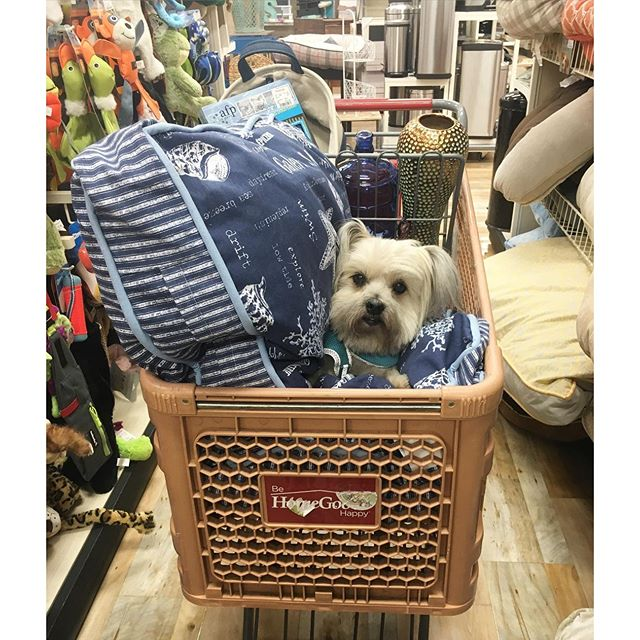 My shopping buddy today! #dogsofinstagram