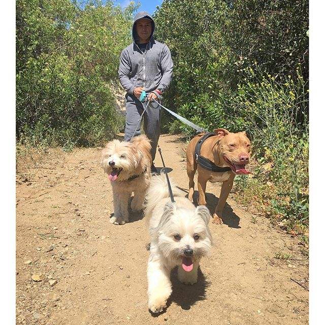 The Gang for today's hike #dog #cuties