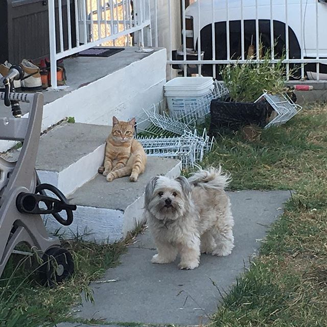 So adorable how the cat hangs out with Daisy... Yeah he will pass on Cookie! // I think I am getting old because little moments like this entertain me // catueeee! 🐈🐕