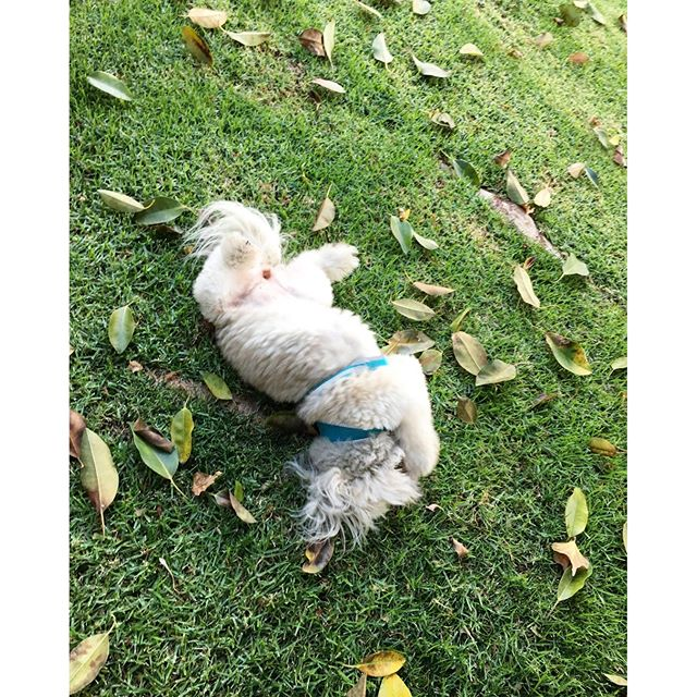 When the grass is so nice, you have to take a moment to enjoy it!!