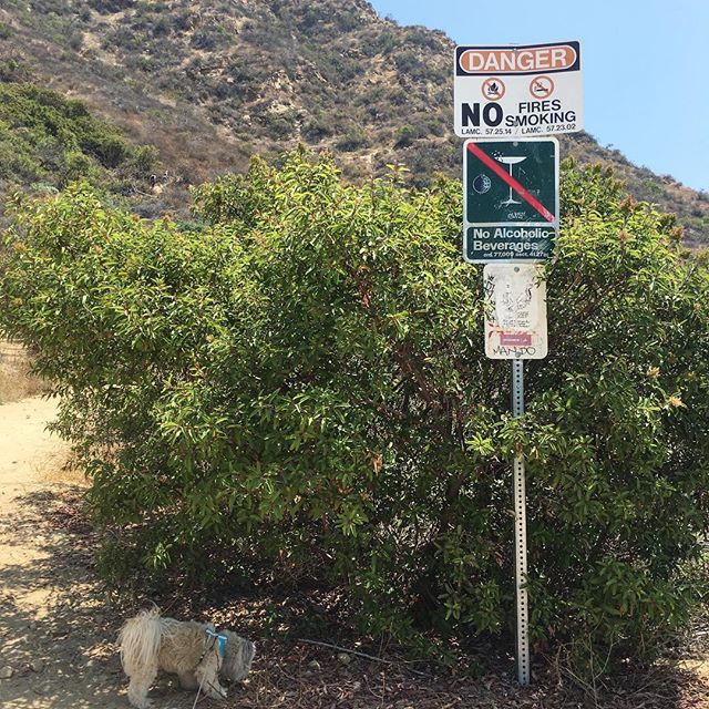 I guessI can't bring my margarita/martini on this trail!! I can sneak in a beer instead, but too much fat calories!!  #pandasadventures