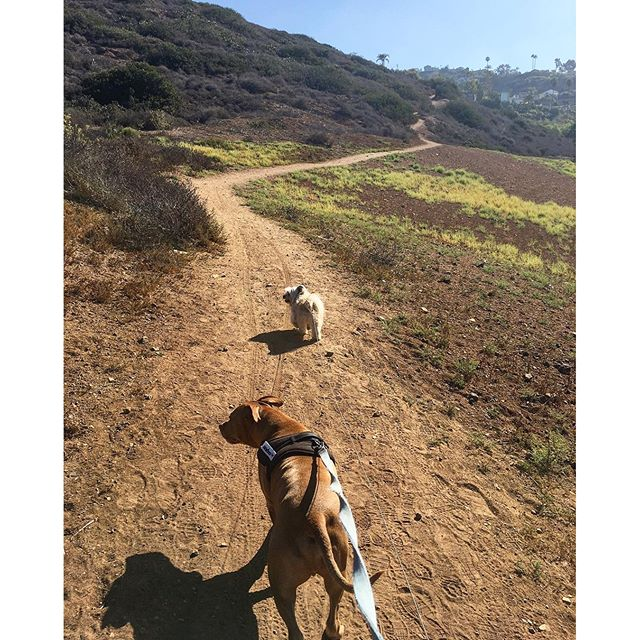 Such a beautiful day for a hike.. Too bad the dogs would rather tour the homes in RPV! #pandasadventures 😇