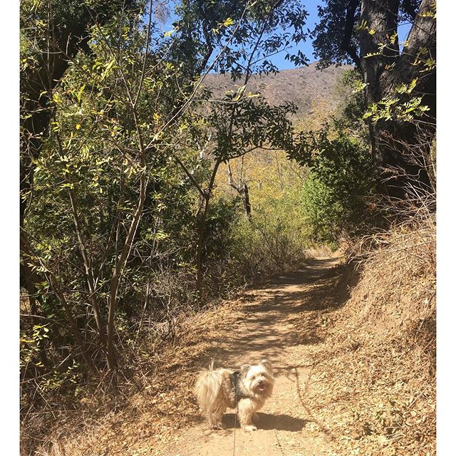 It's feels like it's been awhile since we went on a real hiking trail #Malibu #pandasadventures #outdoors 🏼 @swayray
