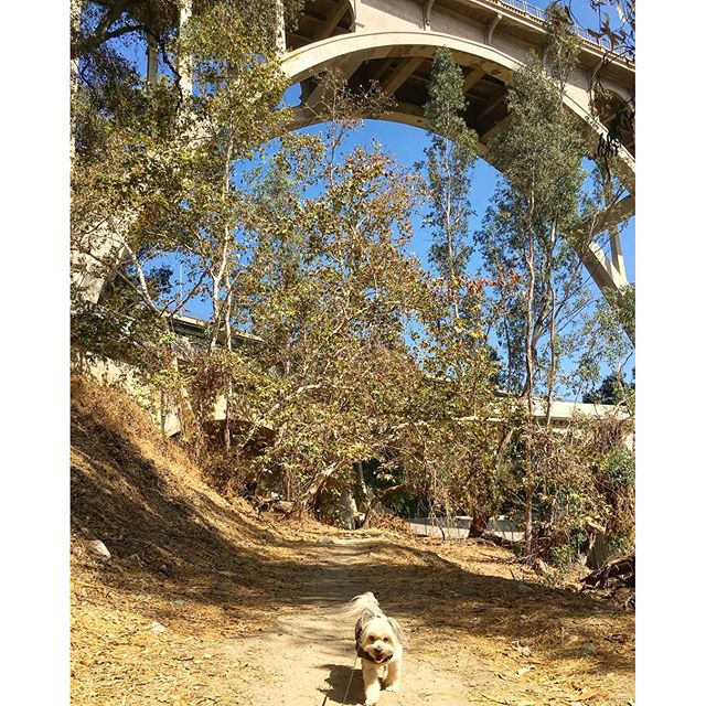 Bridging through life... Except mama & papa sort of both twisted their ankles and no not at the same time! #pandasadventures