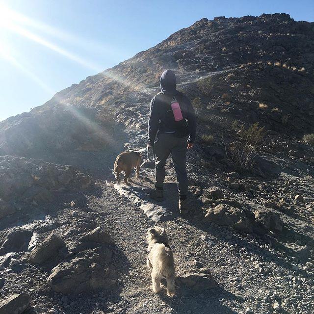 Even on a mini vacay we hike! #pandasadventures 🐕🛤
