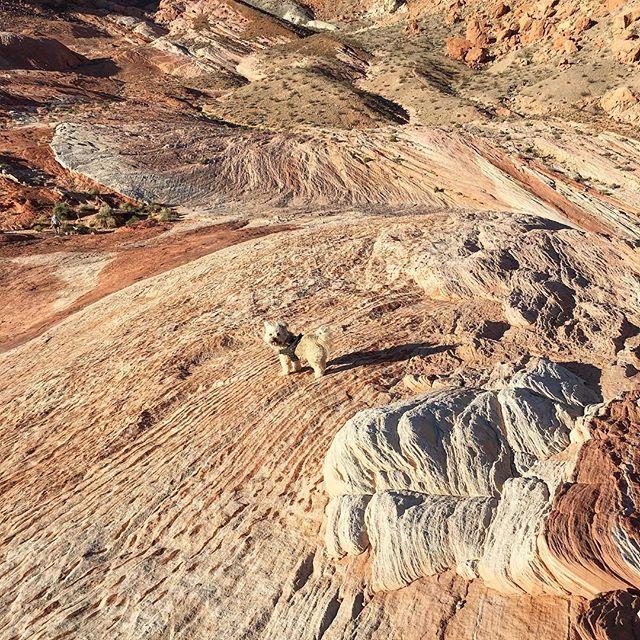 Valley of fire  #dog 🐕😀🏞 #pandasadventures #hiking