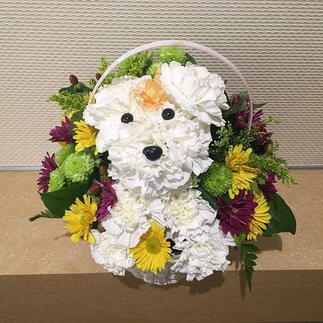 This flower dog totally made my day.. A little unexpected but super cheesing! Thanks @swayray