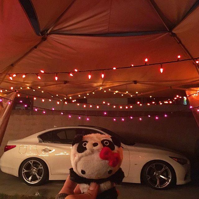 Panda Panda Panda.. Sad thanksgiving is over and it's already time to put up the Christmas lights! ☃🚦🏼 #pandasadventures