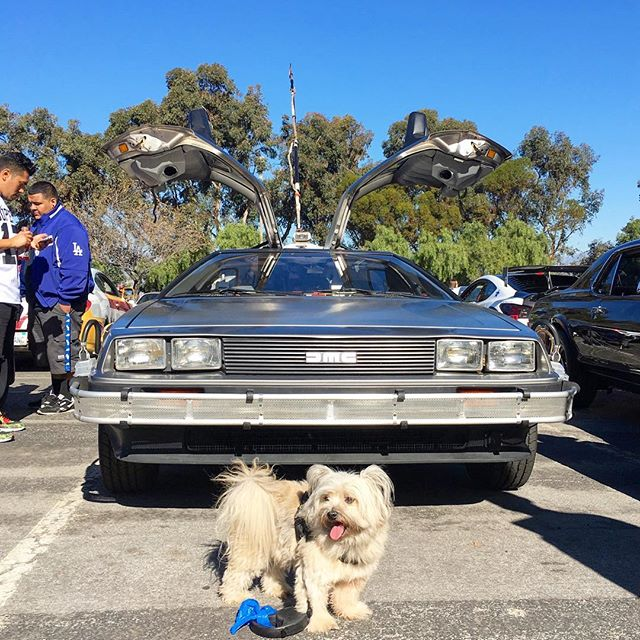 When your dog doesn't feel like posing! #pandasadventures #cars