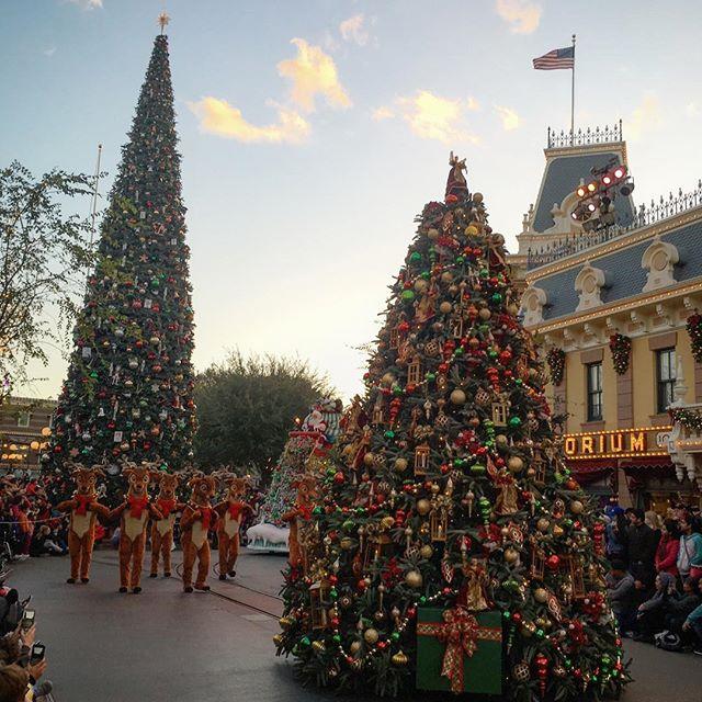 Double the Christmas trees.. 🏻 #pandasadventures