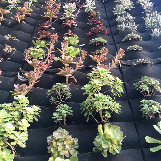 I need a plant wall like this... 🌲 #pandasadventures