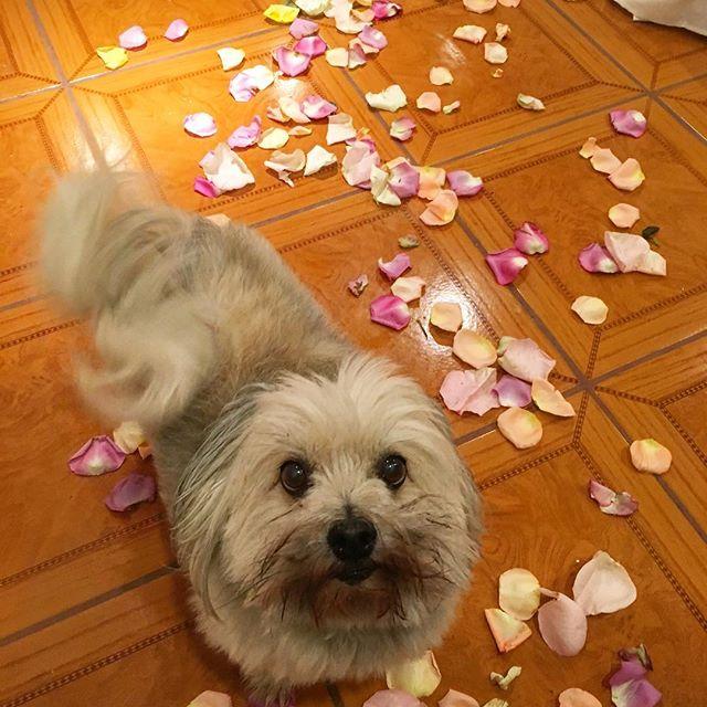 The cutest valentines door greeter! #dogs #pandasadventures 🏻