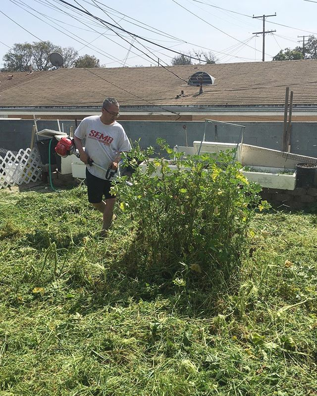 My gardener today is Vietnamese and reps the SEMA lyfe! Our grass has gone locaaaa! So glad our back yard forest/mini hiking trail got a trim. So tired from doing yard work... Raking us tiring!  #pandasadventures
